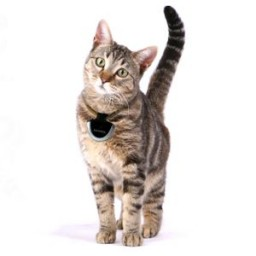 Eyenimal cat cam